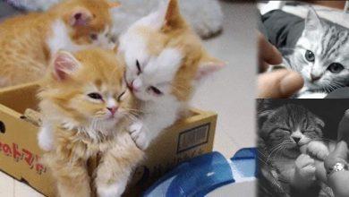Photo of En yeni kedi fotoğrafları – gifleri