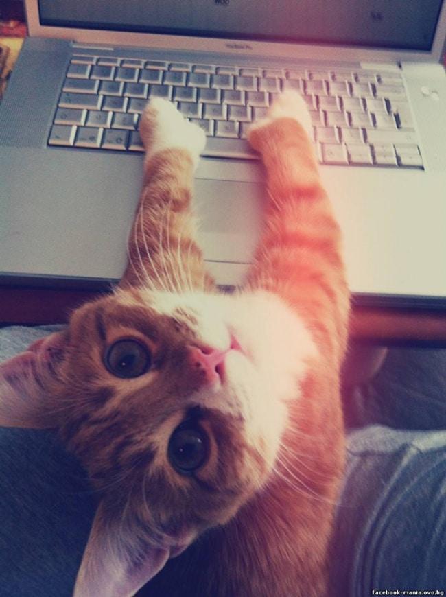 rahat-vermeyen-kediler-5