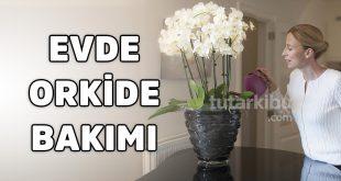 Evde Orkide Bakımı